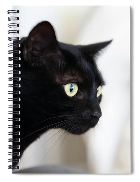 Feline On The Prowl Spiral Notebook