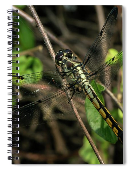 Female Bar-winged Skimmer Spiral Notebook