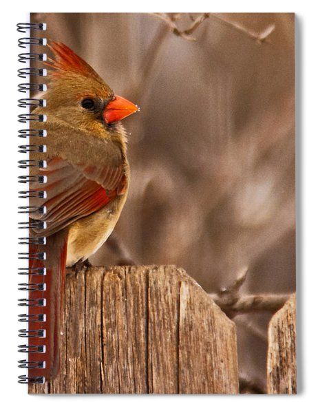 Spiral Notebook featuring the photograph Female Cardinal On The Fence by Edward Peterson