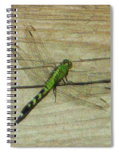 Female Eastern Pondhawk Dragonfly Spiral Notebook