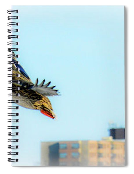 Female Mallard Spiral Notebook