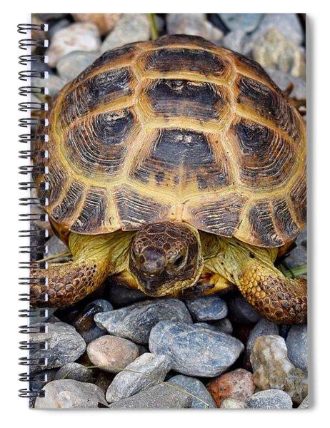 Female Russian Tortoise Spiral Notebook