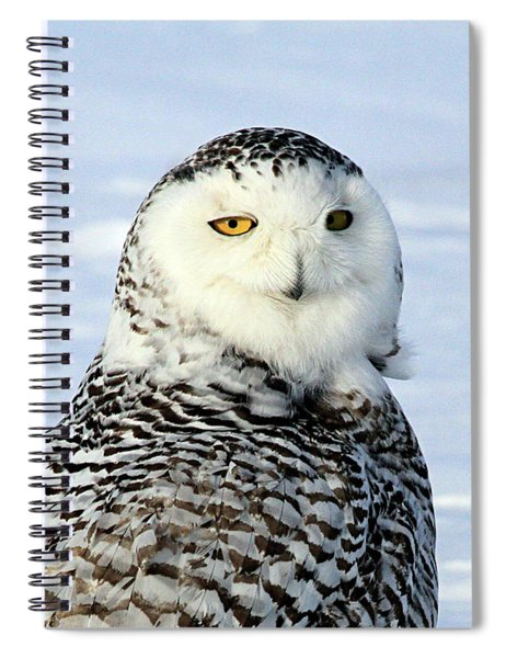 Female Snowy Owl Spiral Notebook