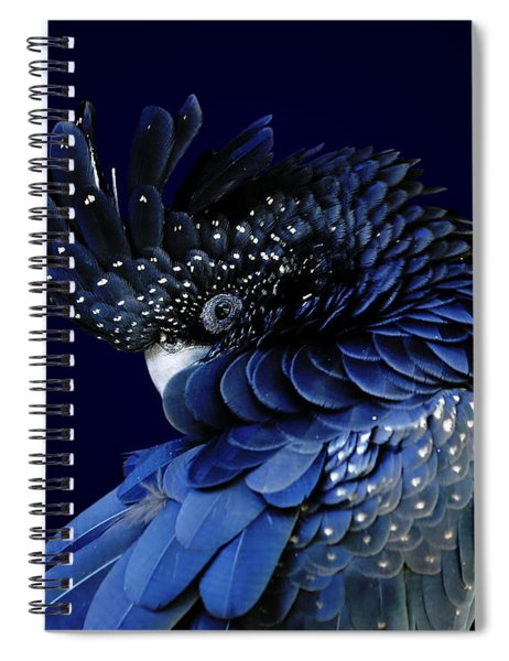 Fibonacci Cockatoo Spiral Notebook