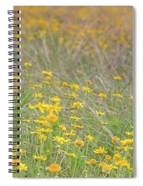Field Of Yellow Flowers In A Sunny Spring Day Spiral Notebook
