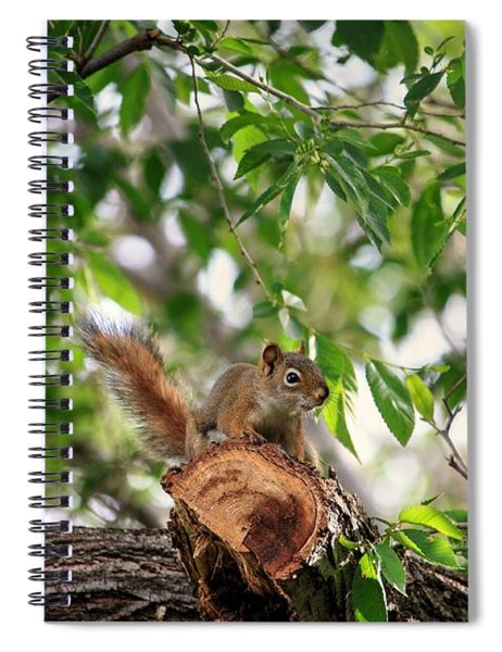 Find The Squirrel  Spiral Notebook