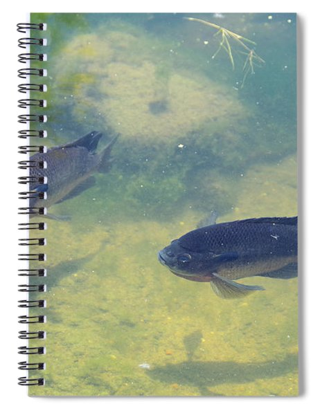 Fish Casting Shadows Spiral Notebook