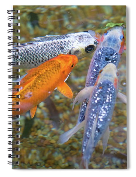 Fish Fighting For Food Spiral Notebook