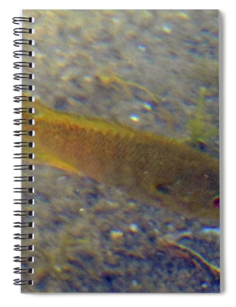 Fish Sandy Bottom Spiral Notebook