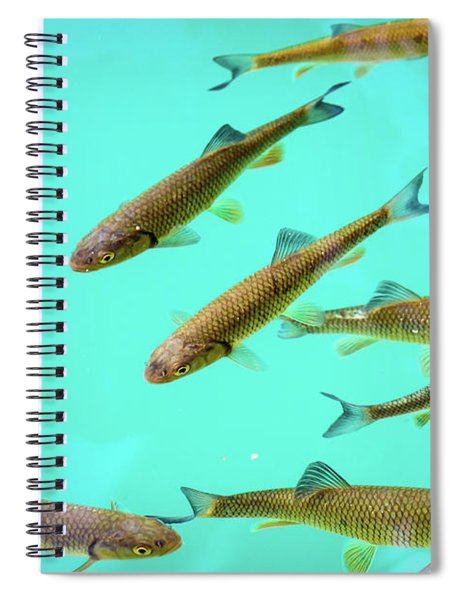 Fish School In Turquoise Lake - Plitvice Lakes National Park, Croatia Spiral Notebook