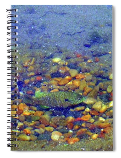 Fish Spawning Spiral Notebook
