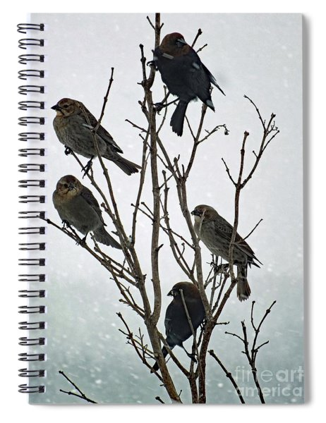 Five Cowbirds Sitting In A Tree Spiral Notebook