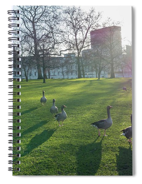 Five Ducks Walking In Line At Sunset With London Museum In The B Spiral Notebook