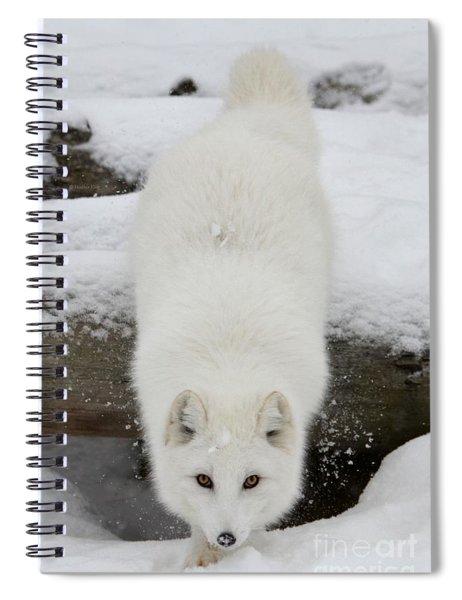 Fixated Spiral Notebook