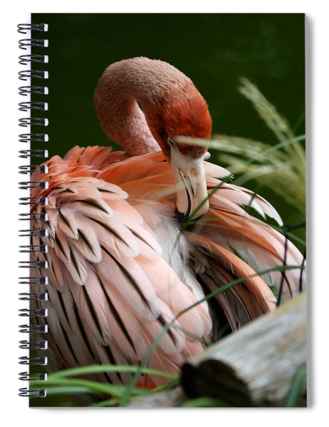 Flamingo Boudoir Spiral Notebook