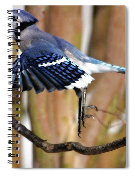 Flight Of The Blue Jay Spiral Notebook