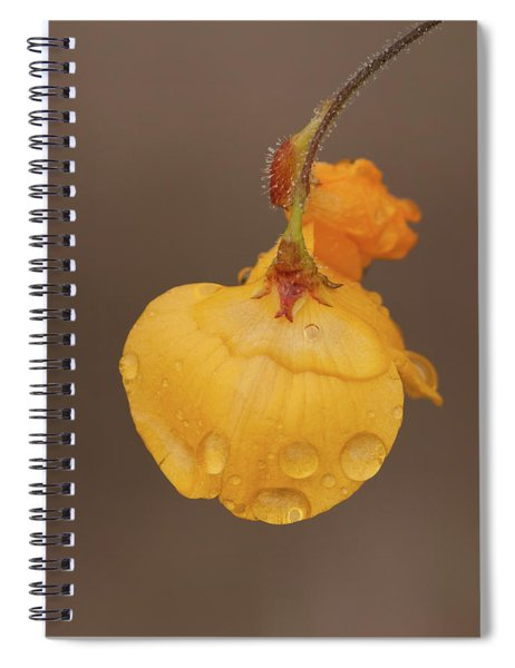 Florida Alicia Spiral Notebook