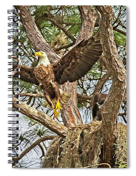 Florida Bald Eagle Spiral Notebook