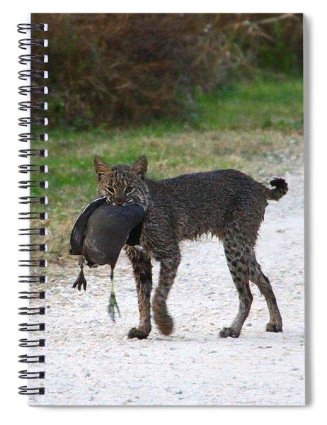 Florida Bobcat Catches An Evening Snack Spiral Notebook
