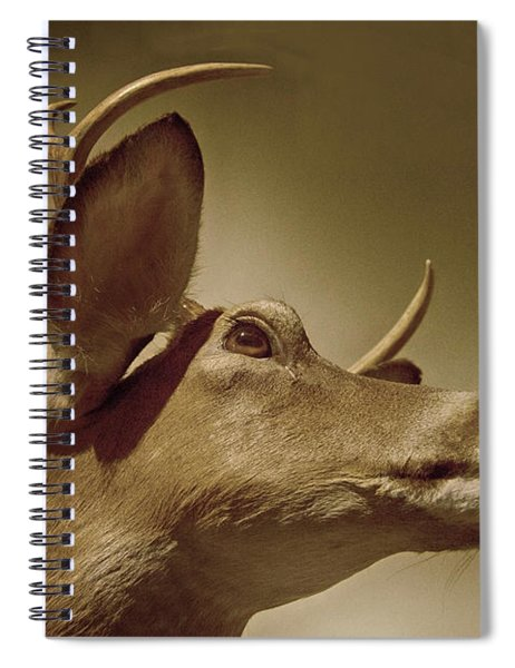 Florida Deer Spiral Notebook