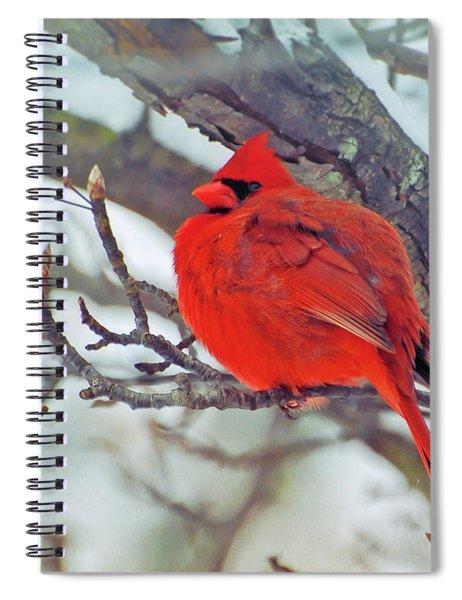 Fluffed Up Male Cardinal Spiral Notebook