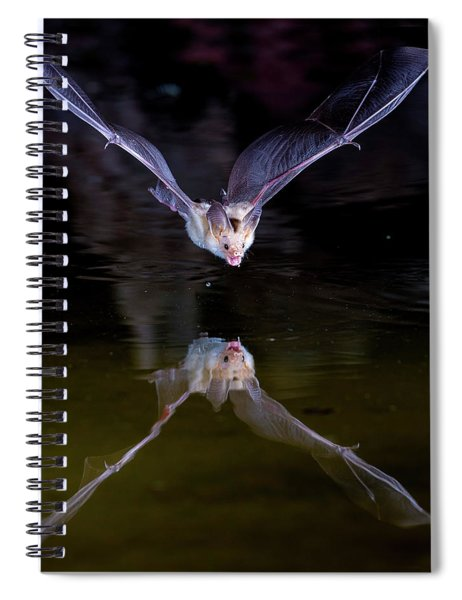 Flying Bat With Reflection Spiral Notebook