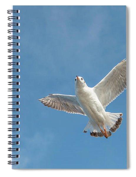 Flying Seagull Spiral Notebook by Pradeep Raja PRINTS
