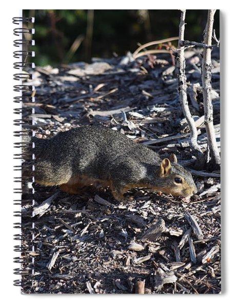 Squirrel Pprh Woodland Park Co Spiral Notebook