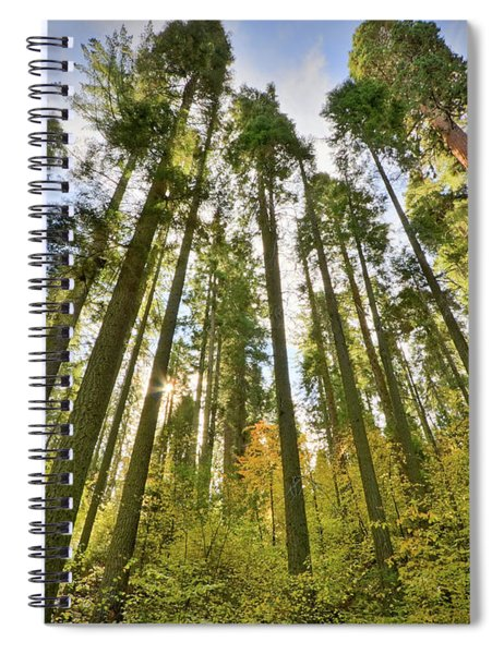 Forest Of Light Spiral Notebook
