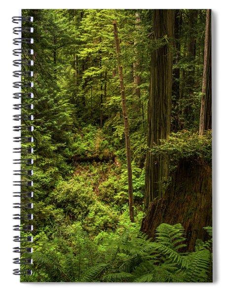 Forest Primeval Spiral Notebook