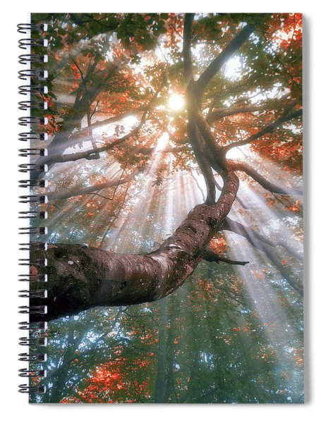 Forest With Fog And Sun Rays Spiral Notebook