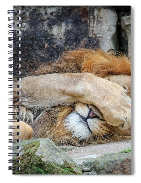 Spiral Notebook featuring the photograph Fort Worth Zoo Sleepy Lion by Robert Bellomy