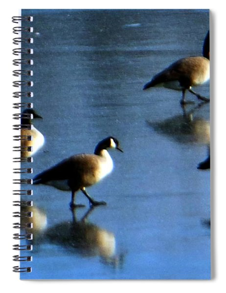 Four Geese Walking On Ice Spiral Notebook