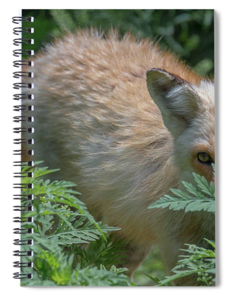 Fox In The Ferns Spiral Notebook