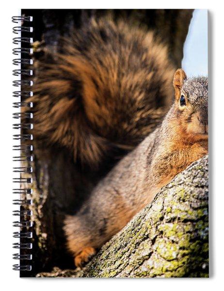 Fox Squirrel Watching Me Spiral Notebook