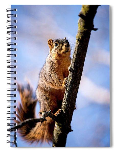 Fox Squirrel's Last Look Spiral Notebook