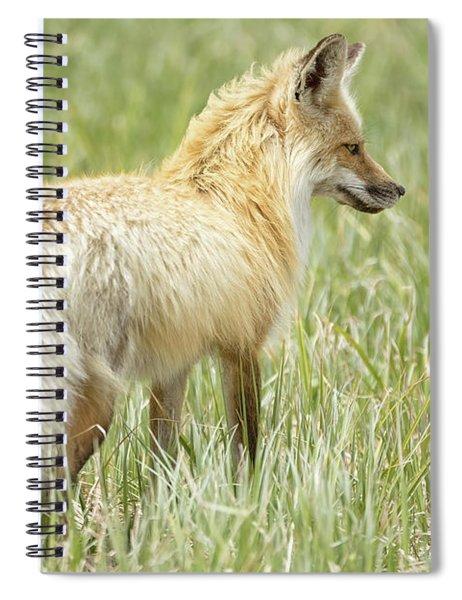 Foxy Lady Spiral Notebook