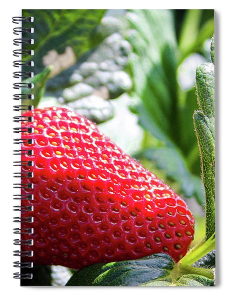 Spiral Notebook featuring the photograph Fraise by Alison Frank
