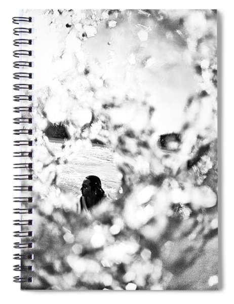 Framed Spiral Notebook