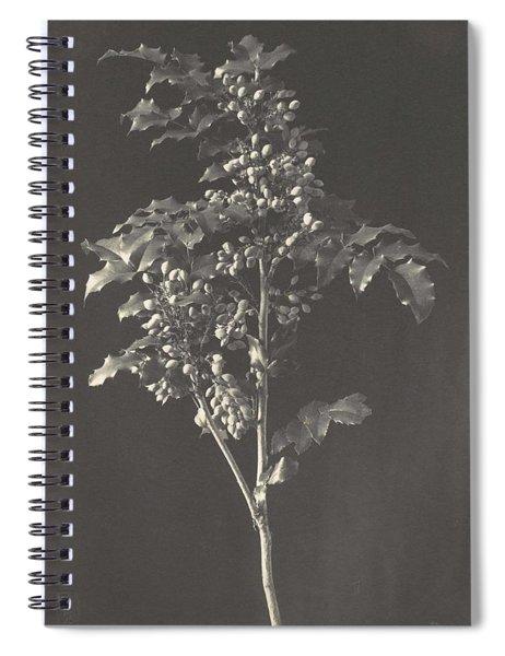Frederick H. Evans, British, London 1853-1943 London, A Stalk Of Berbery Spiral Notebook