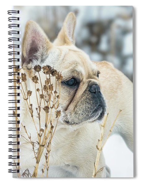 French Bulldog In The Snow Spiral Notebook