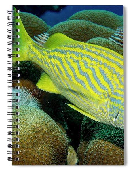 French Grunt Spiral Notebook