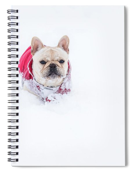 Frenchie In The Snow Spiral Notebook