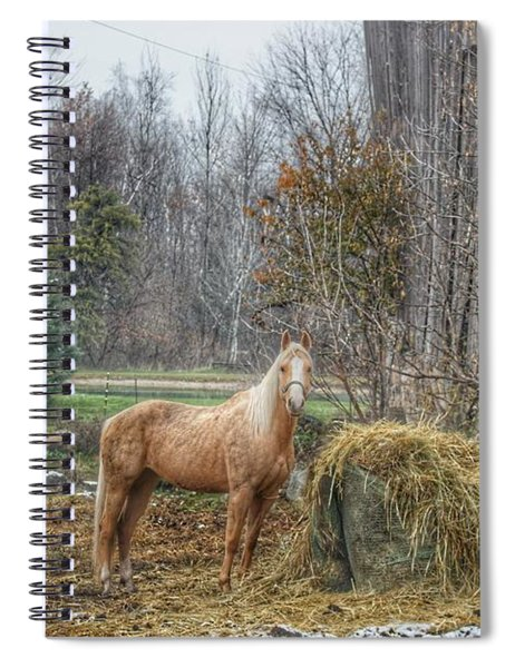 1016 - Frenchline Road Carmel Mare I Spiral Notebook