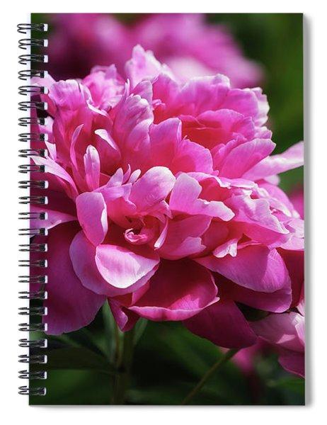 Friday Morning Peonies Spiral Notebook