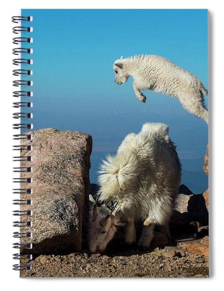 Leaping Baby Mountain Goat Spiral Notebook