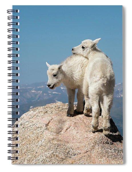 Frisky Mountain Goat Babies Spiral Notebook