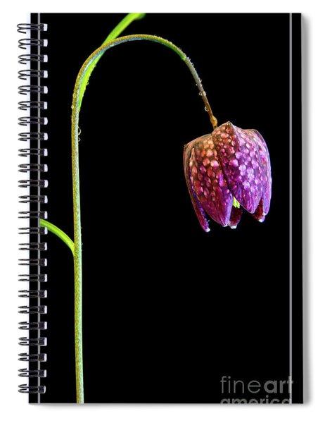 Fritillaria Meleagris, Snakes Head Fritillary Spiral Notebook