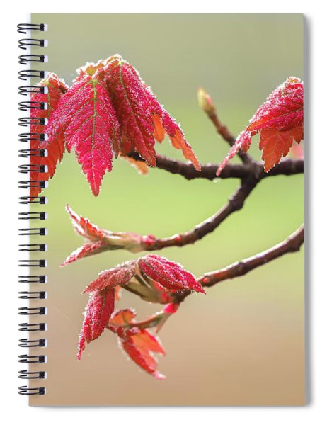 Frosty Maple Leaves Spiral Notebook