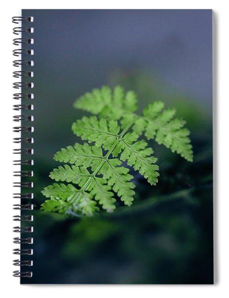 Frozen Fern II Spiral Notebook